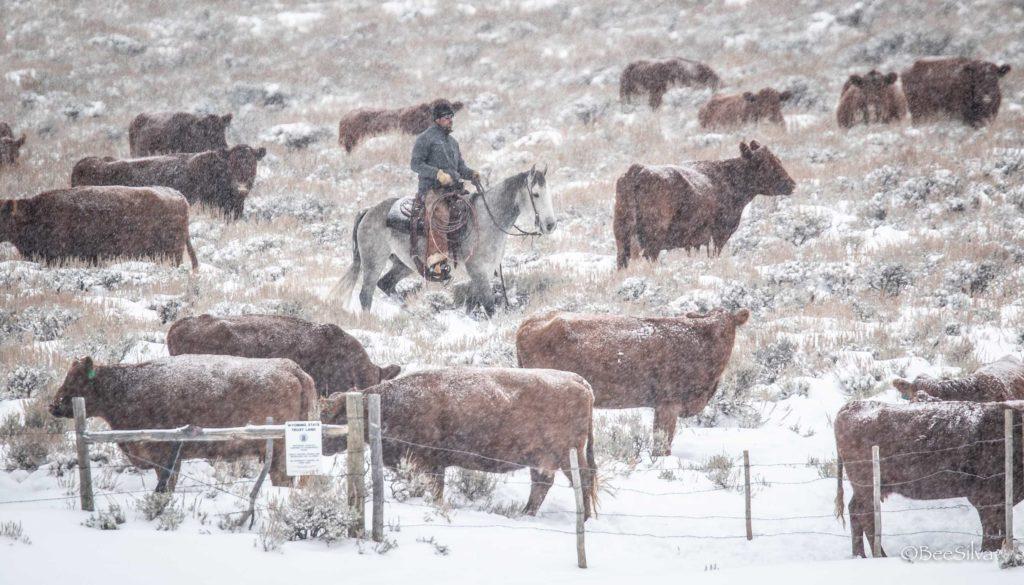 Wagonhound Douglas, Wyoming