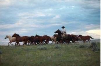 Donation boosts renowned CSU equine program!