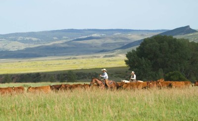 Wagonhound Land and Livestock in Wyoming offers plenty of hills and meadows, areas that Matt Koch utilizes to prepare his cow horses for the show pen.