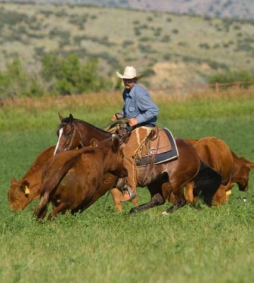 When stopping and turning on grass, horses learn to use their front end for better traction.