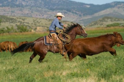 In open spaces, horses must closely read cattle, which run in unpredictable directions and behave differently than in an arena.