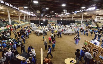 News From the Sale Horse Industry