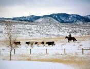 Wagonhound Land & Livestock Trainer Matt Koch