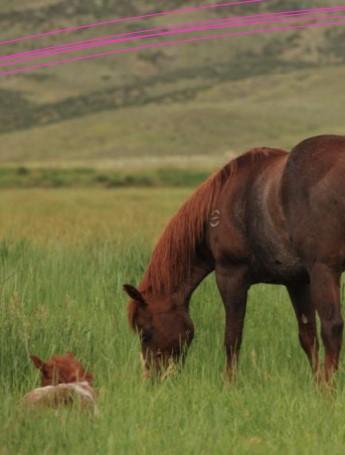 Wagonhound Land and Livestock
