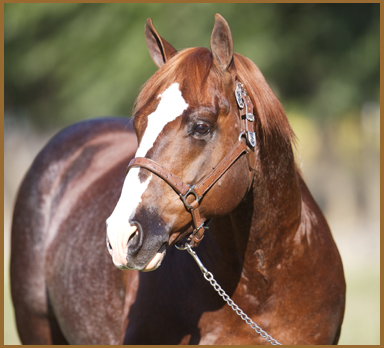 2013-2014 NYCHA Online Stallion Auction