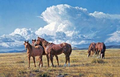 Western Horseman - Tim Cox