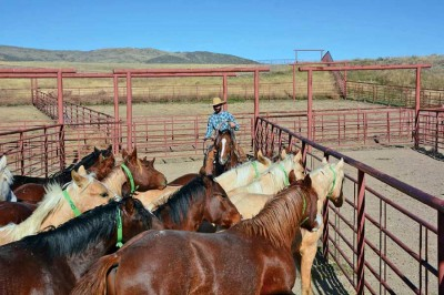 Wagonhound Land & Livestock