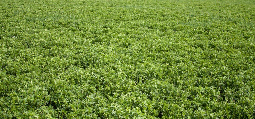 Wyoming Alfalfa Farm