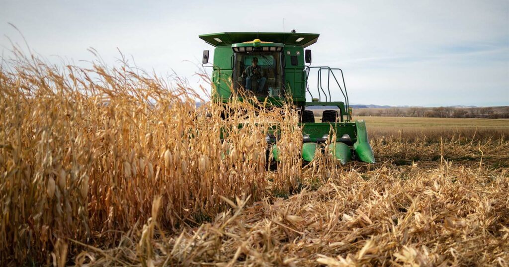 Corn Harvesting Douglas, Wyoming