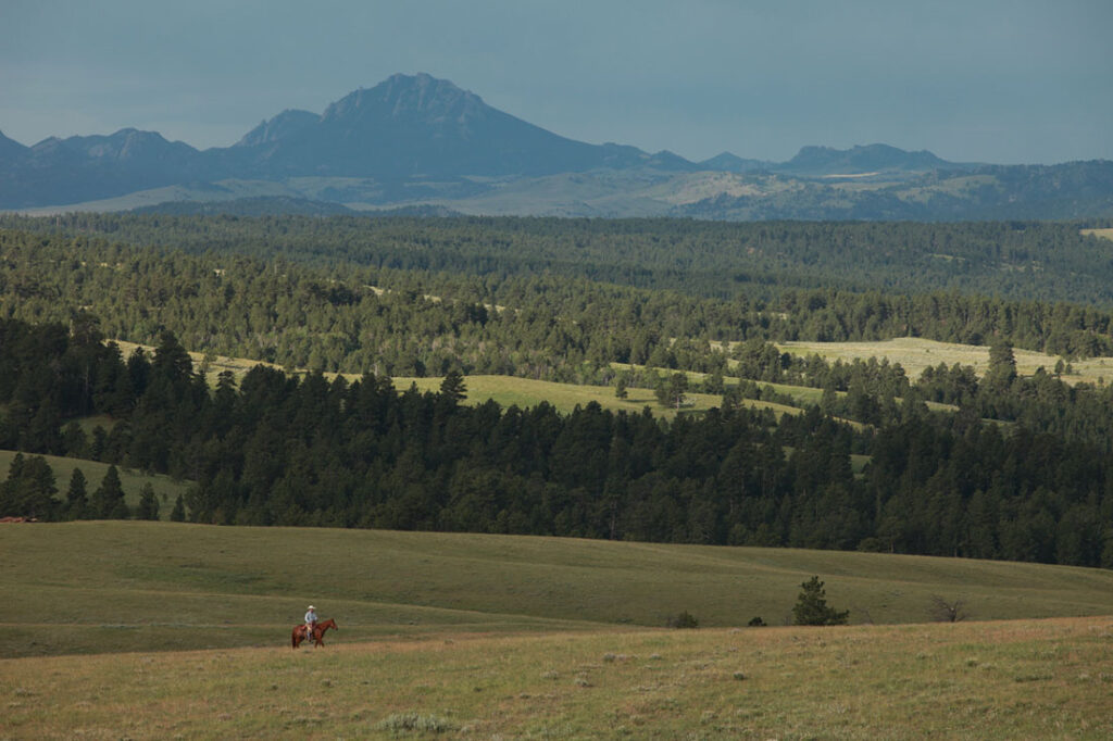 Cowboy on Horse in Wyoming Pasture