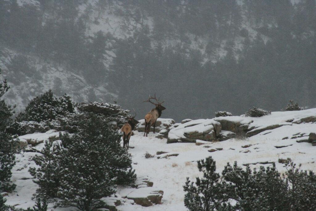Elk Mountain Range