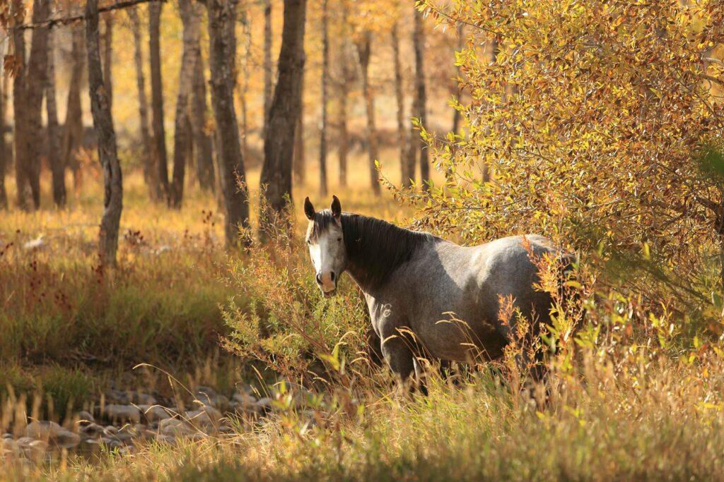 Good Quarter Horses Wyoming