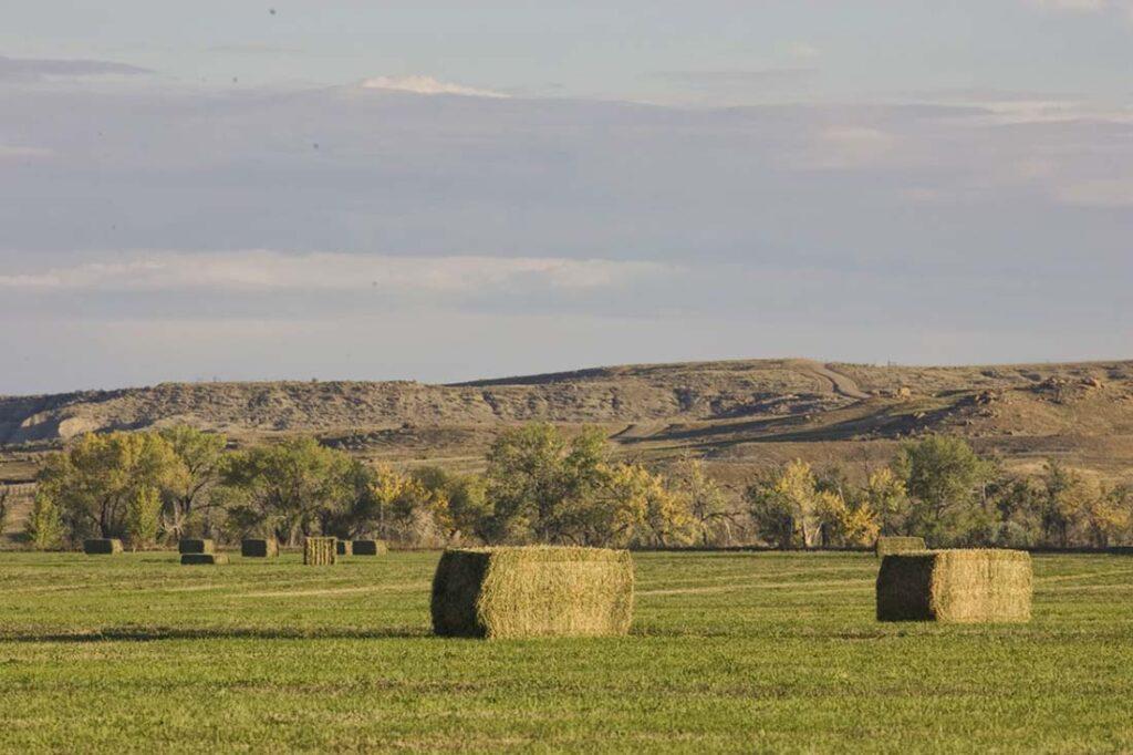 Hay Bales for Sale Douglas, WY