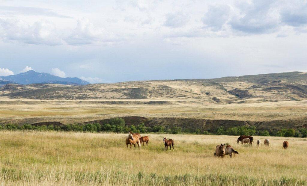 Horses in pasture in Wyoming