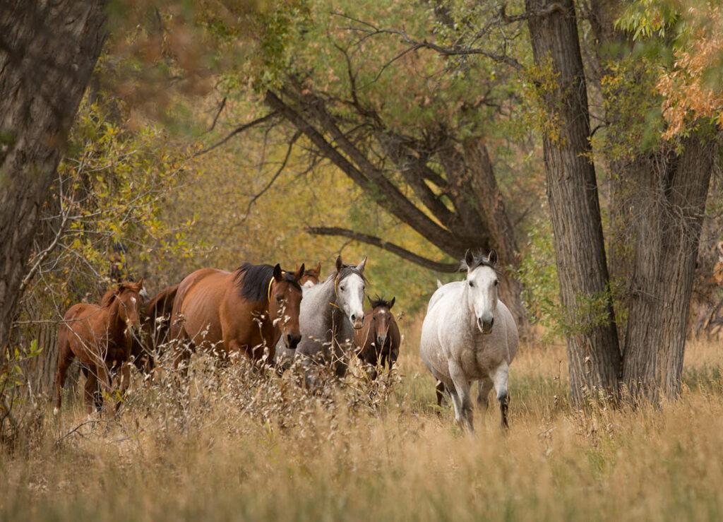 Quarter Horses in Douglas, WY