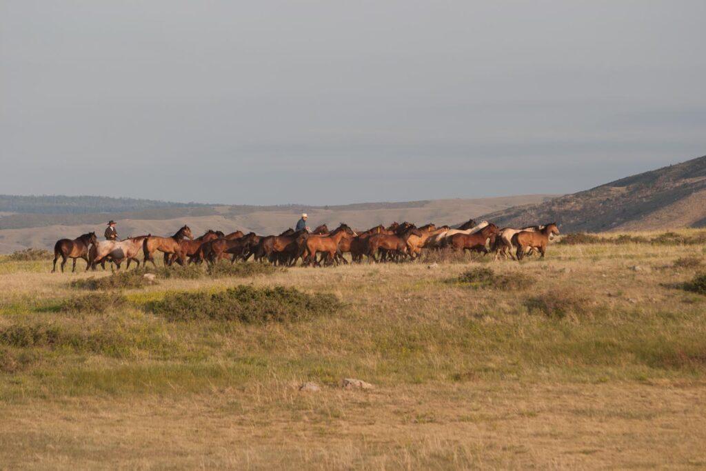 String of Quarter Horses in Douglas