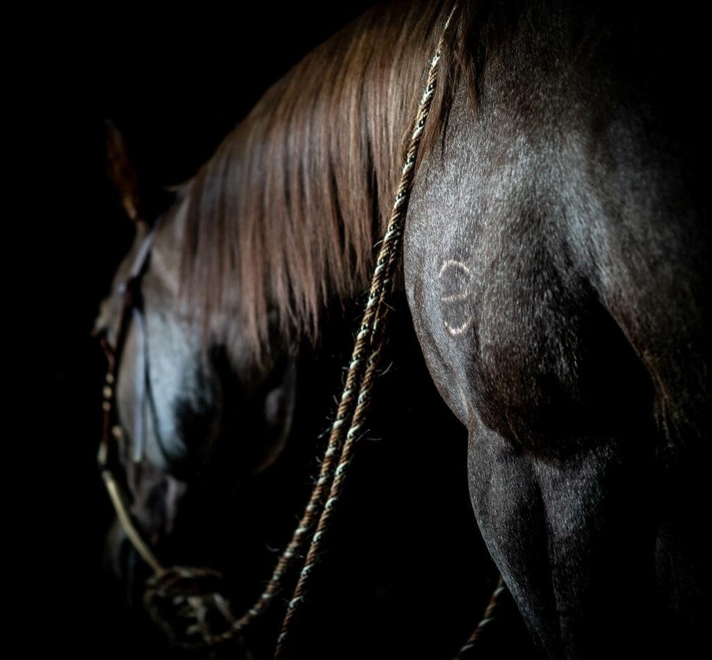 Best Quarter Horses in Wyoming
