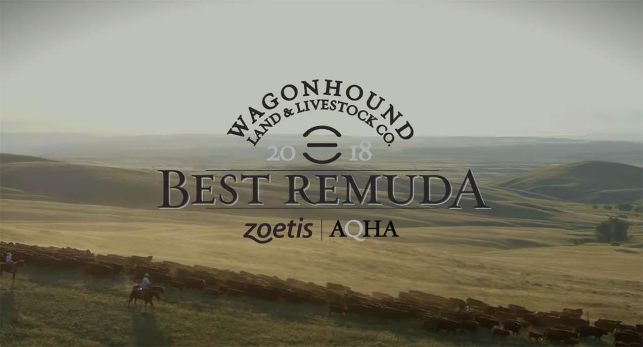2018 Zoetis AQHA Best Remuda Award