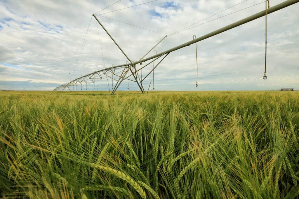 Irrigated Farming WY