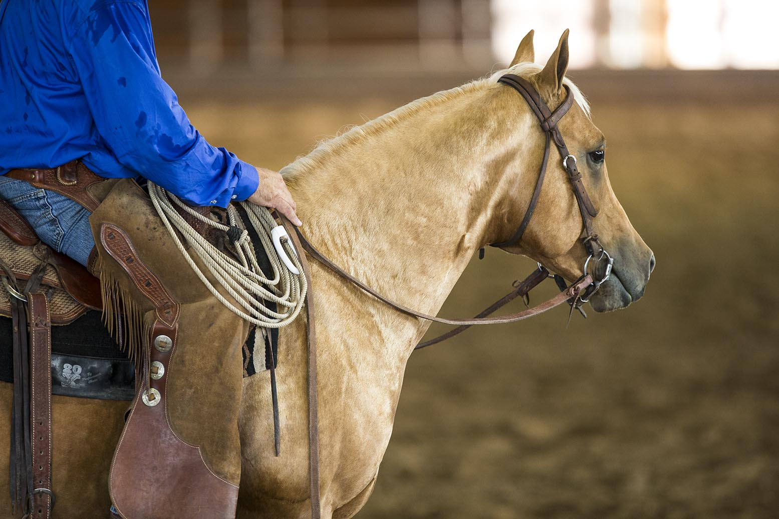 2019 AQHA Highest Money-Earning Ranching Heritage Breeder