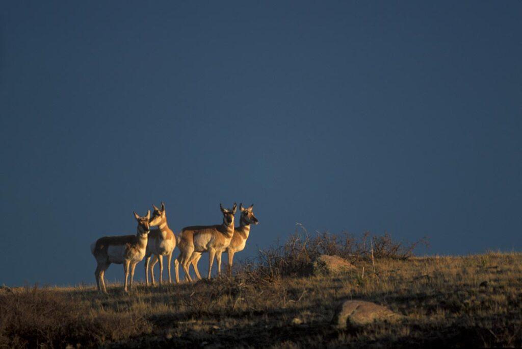 Wildlife at Wagonhound Ranch